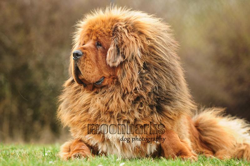 Focen� ps� Praha - focen� ps� v ateli�ru