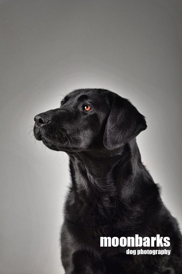 Focení prů v ateliéru - profesionální fotograf psů