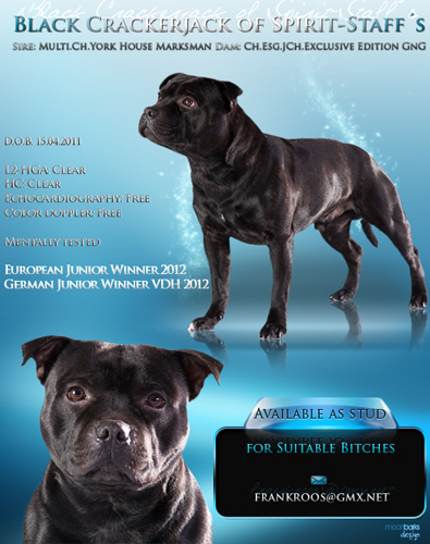 Dog graphics flyer design