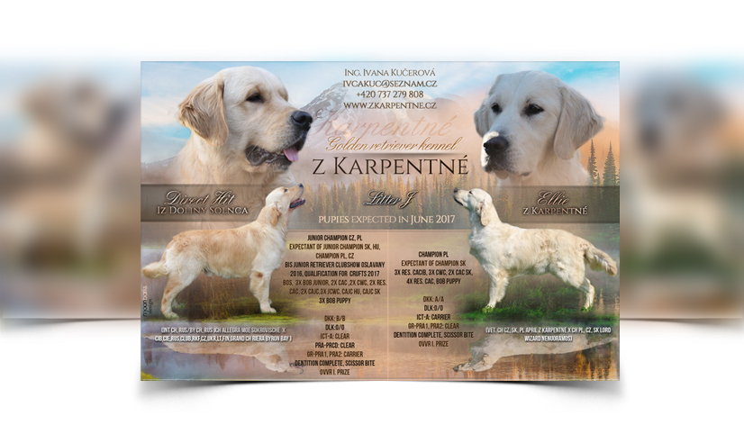 Breeder webdesign dog kennel design best dog breeder for Puppy for sale flyer templates