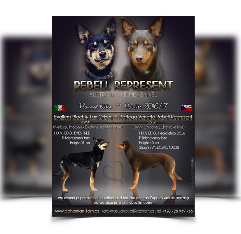 Breeder webdesign, dog kennel design, Best dog breeder