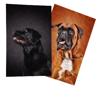 Professional pet photographer Prague