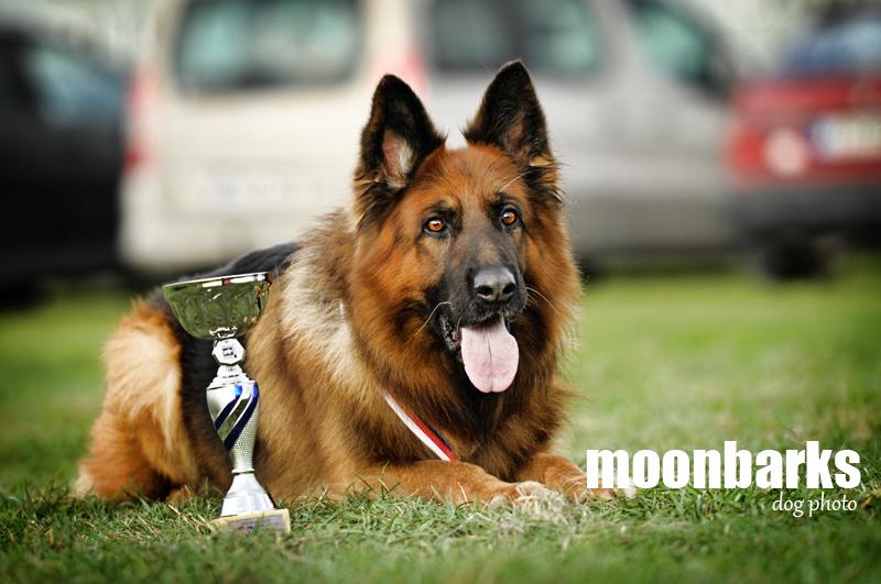 Umělecká fotografie psů - Fotograf psů Praha www.moonbarks.cz