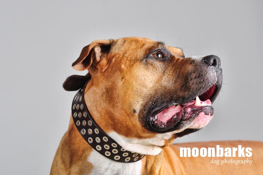 Focení psů Praha fotograf psů moonbarks PVP
