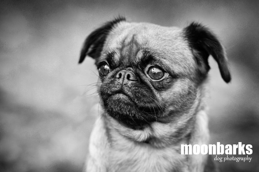 Profesionální fotograf psů Praha 4 - www.moonbarks.cz