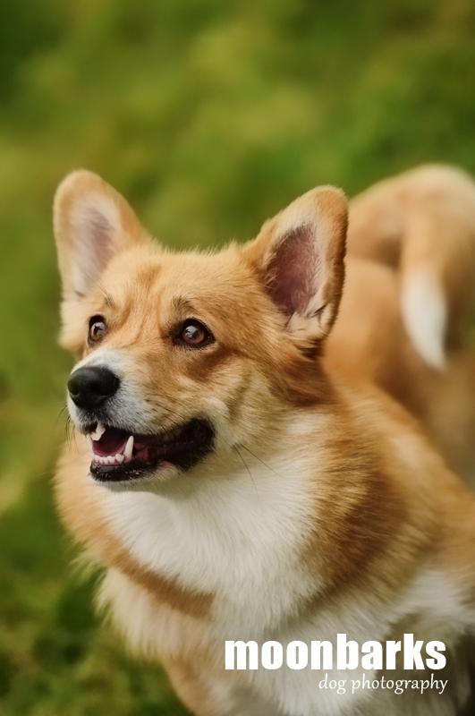 Profesionální fotograf psů focení psů Praha