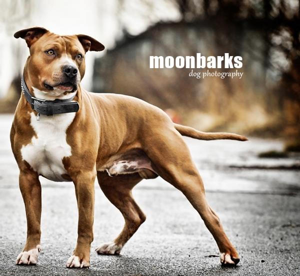 Focení psů Praha foptograf psů by moonbarks