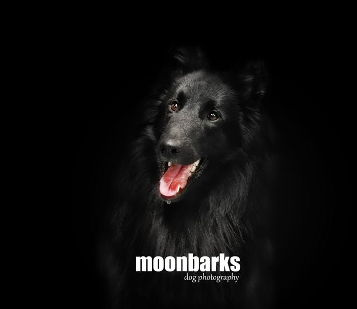 Fotograf psů profesionální - praha moonbarks